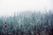 Morning in a fog by Asya Kolokolova
