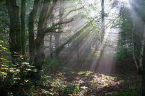 Forest-streaks