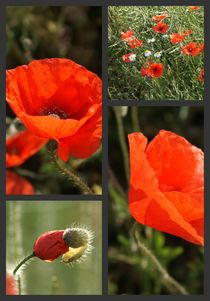 Mohn-Collage 1 von Ina Hartges
