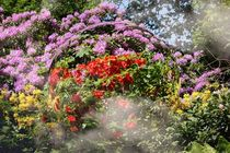 PAINTED GARDEN by photofiction