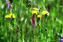 Blumenwiese von Jens Berger