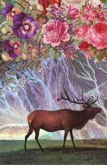 Deer by Dragana Nikolic