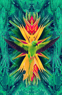 Parrot in the Rainforest von Dragana Nikolic