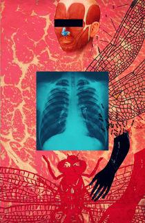 X-Ray by Dragana Nikolic