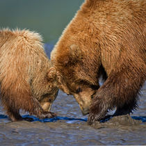 Digging For Clams by David DesRochers