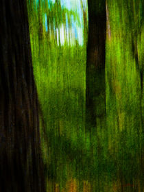 Waldspaziergang no. 16.1 von arteralfo
