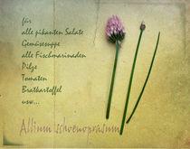 Schnittlauch by Franziska Rullert