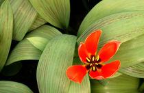 Vibrant-red-flower