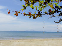 Thailand beach by Wilma Traldi