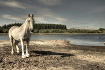 The Old Grey Mare by Rob Hawkins
