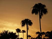 Palmensilhouette im Abendrot von Christine  Hofmann