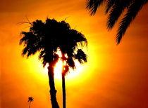 Palme im Abendrot  -3- von Christine  Hofmann