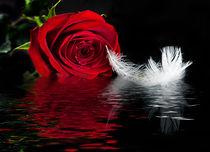 'Crimson Rose ' by Fran Walding