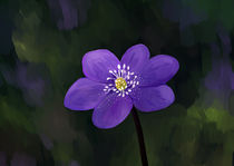 Hepatica von freeminds