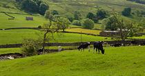 Bishopdale, Yorkshire Dales von Louise Heusinkveld