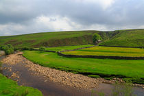 Swaledale, the River and a Meadow by Louise Heusinkveld
