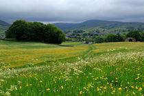 Wildflower meadow near Hawes, Wensleydale von Louise Heusinkveld