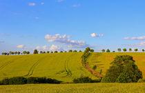Sommerfelder by Wolfgang Dufner
