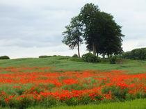 Poppy Hill by Horace Cornflake