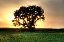 Baum im Abendlicht von Wolfgang Dufner
