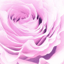 Sweet pastel rose von AD DESIGN Photo + PhotoArt