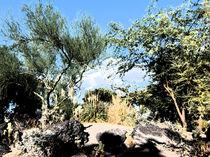 Desert Botanical Garden by kopfkirmes