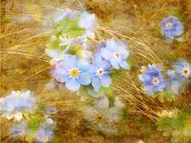 Blütenzart* von claudiag