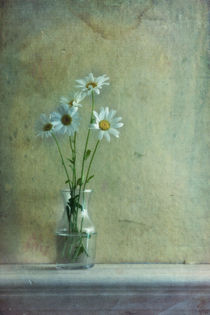 simply daisies