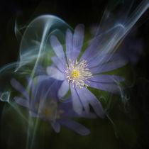 A Tiny Glimpse by Martin Crush