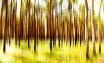Waldzauber von Matthias Rehme