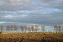 Baumallee im Frühling - Avenue of trees by ropo13