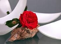 Rose und Stein von Wolfgang Wittpahl