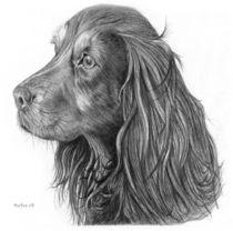 Rufus by Martin Crush