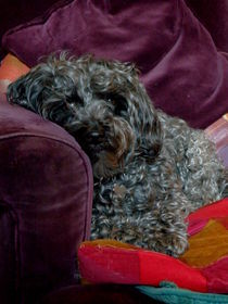 Millie by Lainie Wrightson