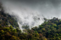 Misty Rain Forest von David Pinzer