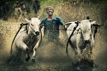 Bull Race von David Pinzer