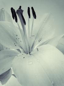 Gedc2492-flower-bw-snapseed2b