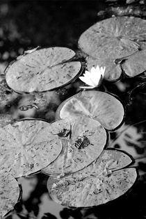 Seerose by Bianca Baker