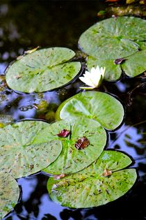 Lily Pad by Bianca Baker