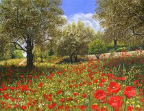 Andalucian-poppies