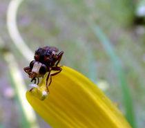Insekt Makro by Simone Cuambe