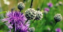 Blumenwiese by tinadefortunata
