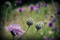 Wildblumen by tinadefortunata