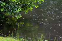 Raindrops by Martina Raab