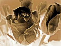 Chocolate roses by sharon lisa clarke