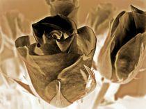 Chocolate-roses