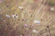 Wind by papallonari