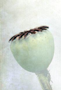 Poppy von Anne Seltmann