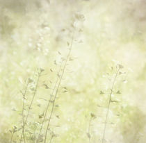 Sommerflirren von Franziska Rullert
