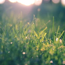 Green Gras Bokeh °1 by syoung-photography